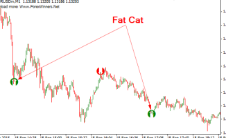 Fat Cat Forex Scalper Indicator